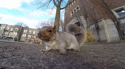 A_squirrel_nabbed_my_GoPro.jpg