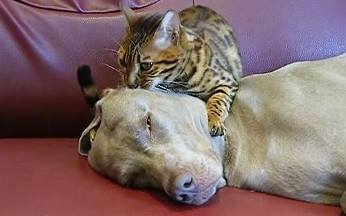Must_see_head_massage_Bengal_style.jpg