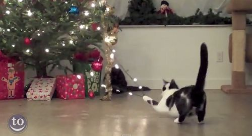 Cats_vs_Christmas_Trees.jpg