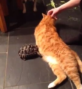 Tortoise_really_doesnt_like_Fred_the_cat.jpg