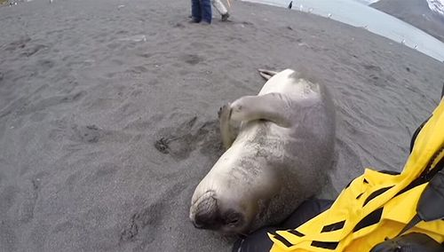 Elephant_Seal_Snuggle.jpg