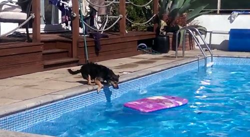 Arthur_the_Dog_surfing_across_a_swimming_pool.jpg