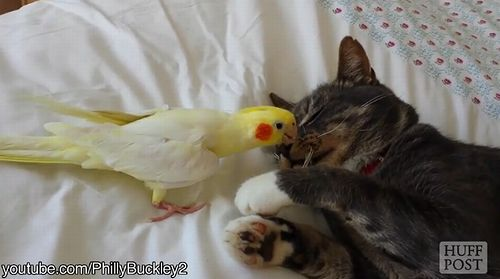cat_and_bird.jpg