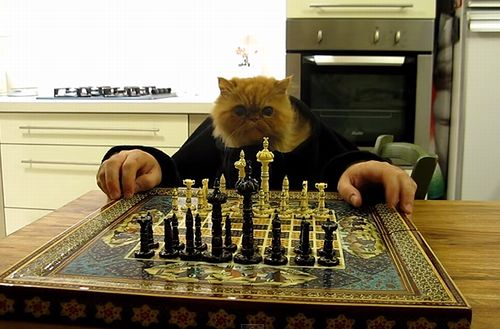 cat_playing_chess.jpg
