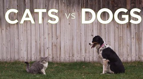 cats_vs_dogs.jpg