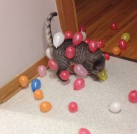 Static_balloon_cat.jpg