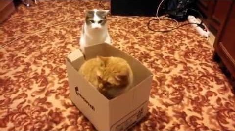 When_two_cats_and_one_box.jpg