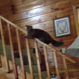 Cat_Slides_Down_Banister.jpg
