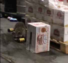 drunk_racoon.png