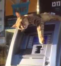 Cat_on_ATM.png