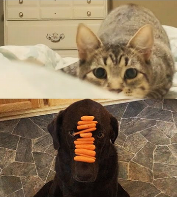 Why_Cats_Are_Better_Than_Dogs.png