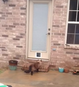 Epic_Cat_Door_Fail.png