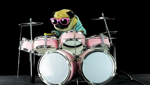 Dog_is_playing_drums.png