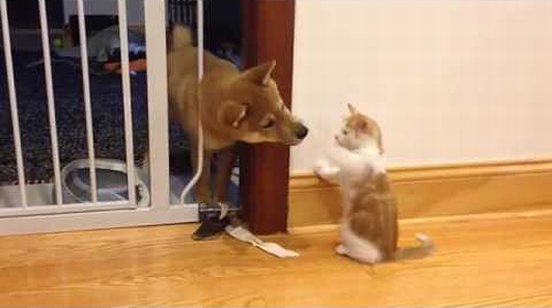 Cutest_puppy_and_kitten_fight.png