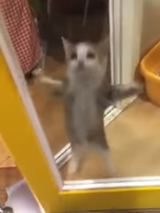 Cute_kitten_jumping.png