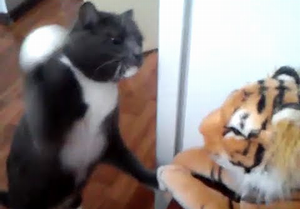 Cat_really_hates_this_tiger.png