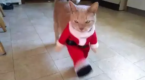 santa_cat_can_can.png