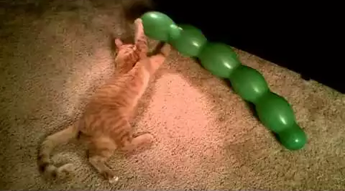 Cat_pops_balloon.png