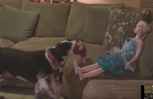 Dog_Tries_To_Play_Fetch_with_a_Doll.png