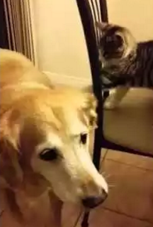 Cat_torturing_dog.png
