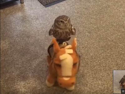 Owl_rides_on_horse_toy.png