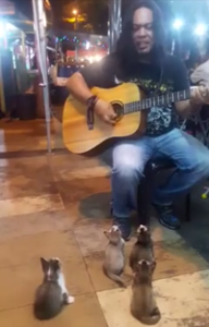 Street_Musician_Performs_for_Audience_of_Kittens.png