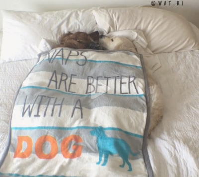 naps_are_better_with_a_dog.png