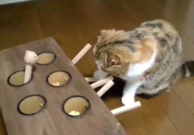 Ingenious_cat_toy.png
