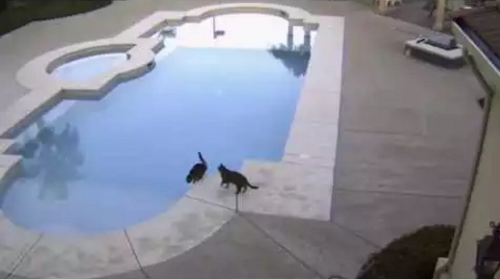 Cat_Pushes_Brother_into_Pool.png