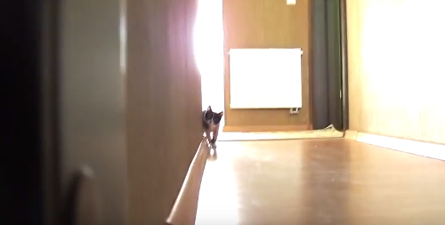 Kitten_Stalking.png
