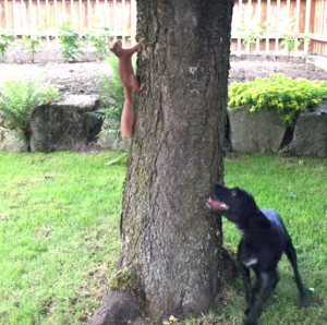 dog_and_squirrel.png