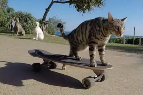 skateboard_cat.png