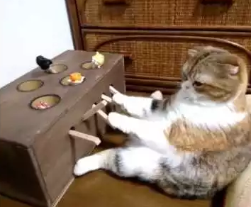 Cat_Plays_DIY_Whack-A-Mole_Game.png