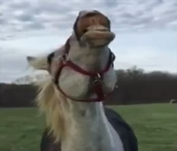 Horse_tries_ice_cream.png