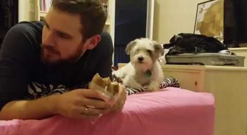 Dog_Secretly_Wants_A_Bite.png