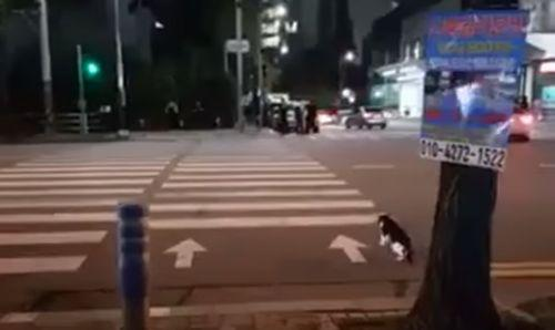 Cat_Traffic_Light_to_Safely.jpg
