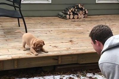 Puppy_learning_the_big_bad_step.jpg