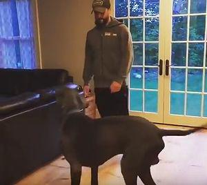 Great_Dane_Does_Lunges_With_His_Human.jpg