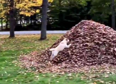 PILE_OF_LEAVES.jpg