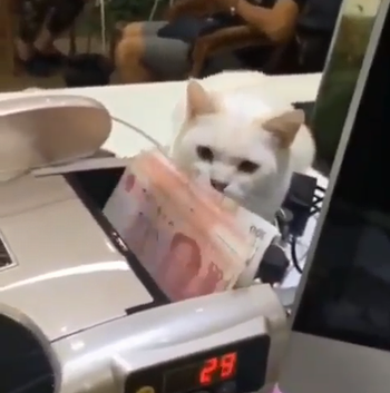 Cats_steal_the_bill.png