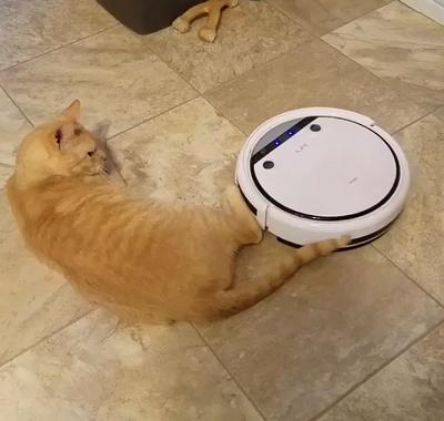 roomba_vs_cat.png