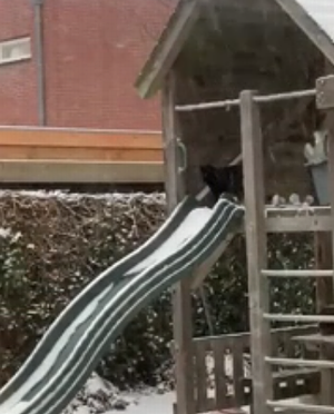 cat_and_slide.png