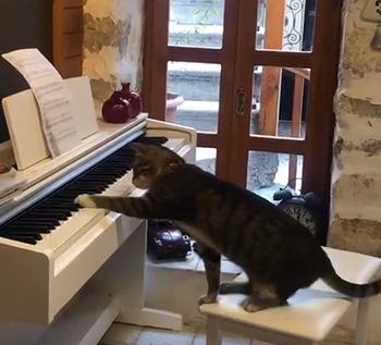 cat_plays_piano.png