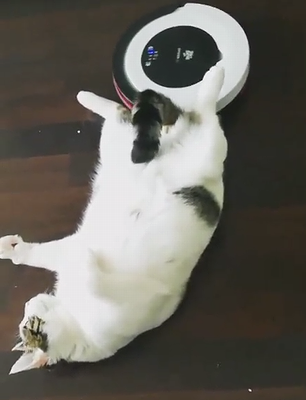 roomba_massage.png