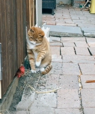 cat_vs_chicken.png