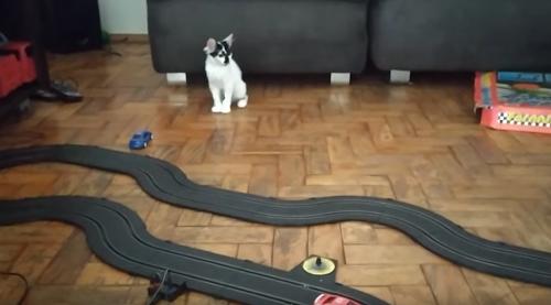 slot_car_cat.png