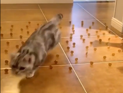 Cats_are_masters_of_the_maze.png