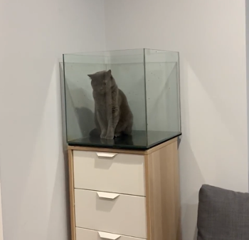 setting_up_a_new_fish_tank.png