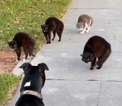 Cat_Pack_Unfriendly_Towards_Pooch.png