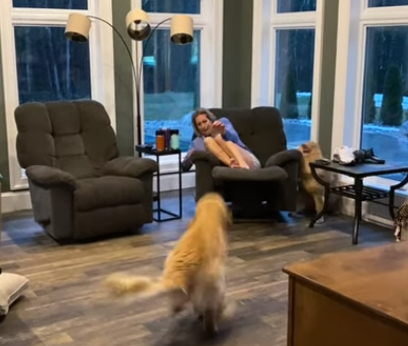 Golden_Retriever_Leaps_for_Attention.png